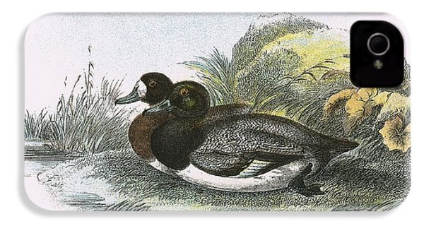 Scaup Duck IPhone 4s Case by English School
