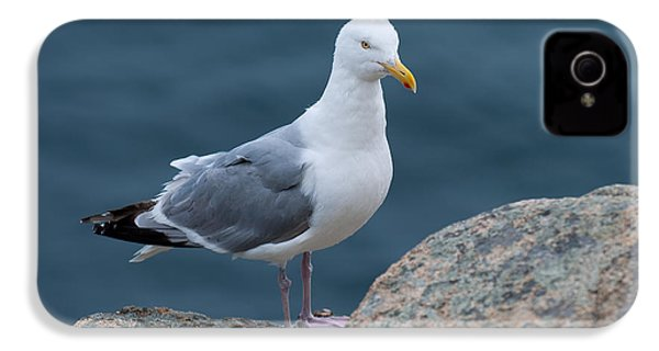 Seagull IPhone 4s Case by Sebastian Musial