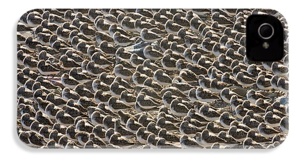 Semipalmated Sandpipers Sleeping IPhone 4s Case by Yva Momatiuk John Eastcott