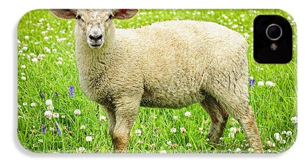 Sheep In Summer Meadow IPhone 4s Case by Elena Elisseeva