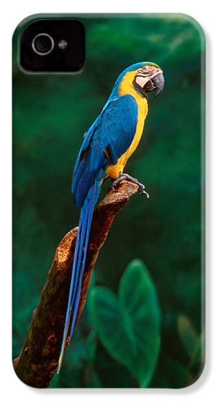 Singapore Macaw At Jurong Bird Park  IPhone 4s Case by Anonymous