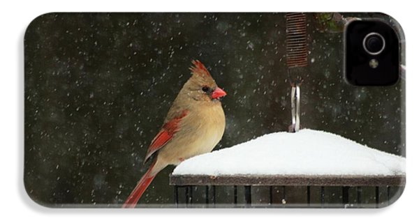 Snowy Cardinal IPhone 4s Case by Benanne Stiens