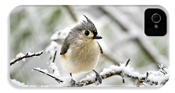 Snowy Tufted Titmouse IPhone 4s Case by Christina Rollo