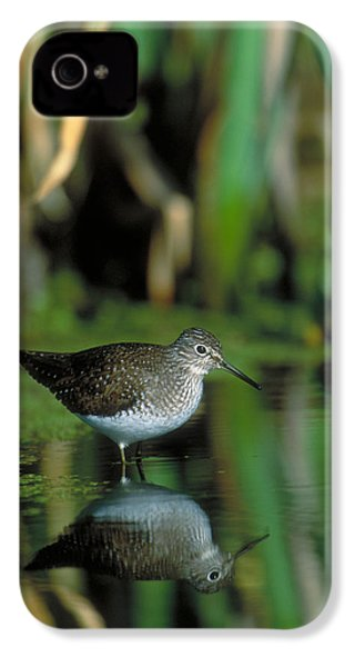 Solitary Sandpiper IPhone 4s Case by Paul J. Fusco