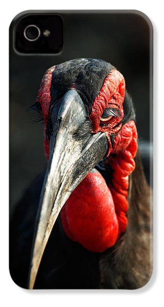 Southern Ground Hornbill Portrait Front View IPhone 4s Case by Johan Swanepoel