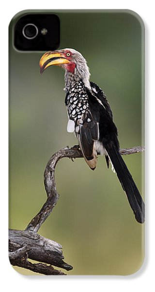 Southern Yellowbilled Hornbill IPhone 4s Case by Johan Swanepoel