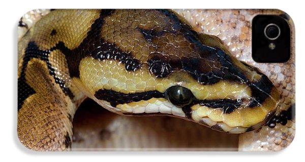 Spider Royal Python IPhone 4s Case