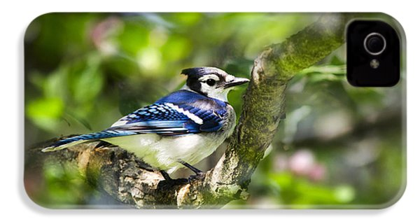 Spring Blue Jay IPhone 4s Case by Christina Rollo