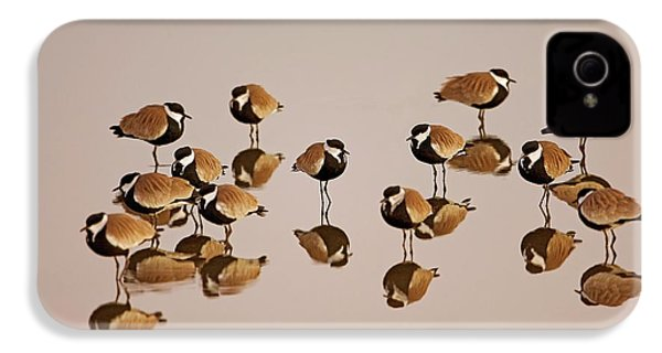 Spur-winged Lapwing (vanellus Spinosus) IPhone 4s Case by Photostock-israel