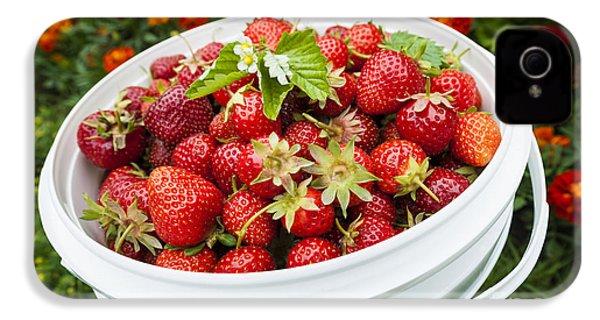 Strawberry Harvest IPhone 4s Case by Elena Elisseeva