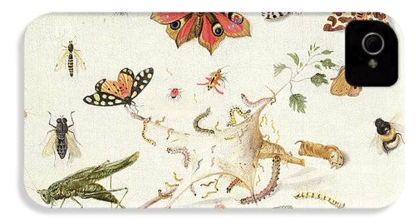 Study Of Insects And Flowers IPhone 4s Case by Ferdinand van Kessel