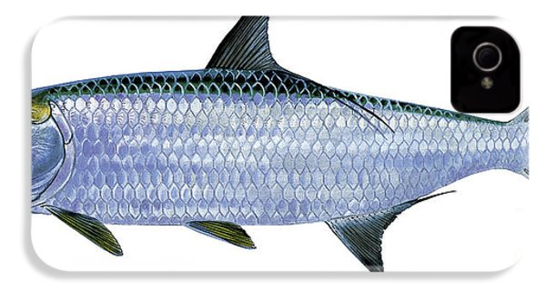 Tarpon IPhone 4s Case by Carey Chen