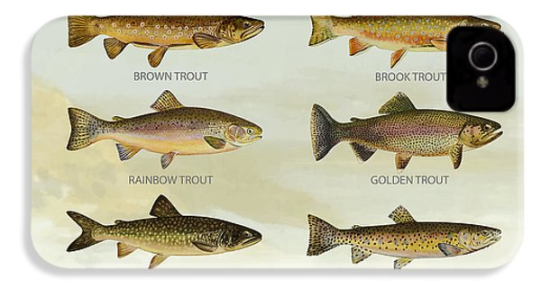 Trout Species IPhone 4s Case by Aged Pixel