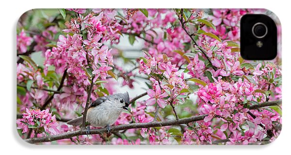 Tufted Titmouse In A Pear Tree IPhone 4s Case by Bill Wakeley