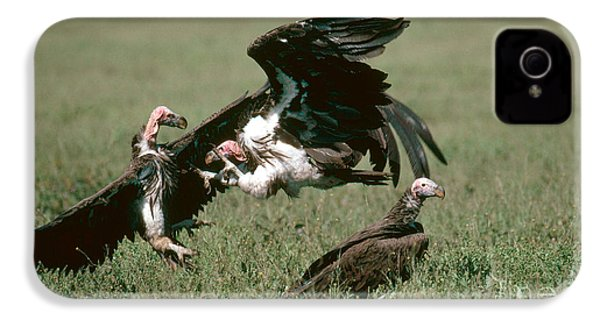 Vulture Fight IPhone 4s Case by Gregory G. Dimijian, M.D.