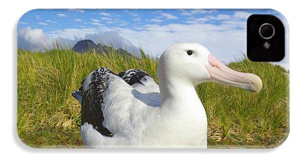 Wandering Albatross Incubating  IPhone 4s Case by Yva Momatiuk John Eastcott