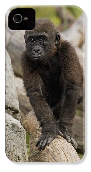 Western Lowland Gorilla Baby IPhone 4s Case by San Diego Zoo