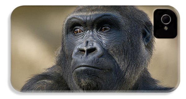Western Lowland Gorilla Portrait IPhone 4s Case by San Diego Zoo