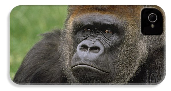 Western Lowland Gorilla Silverback IPhone 4s Case by Gerry Ellis