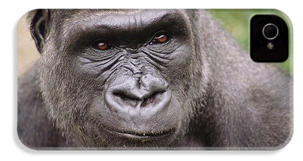 Western Lowland Gorilla Young Male IPhone 4s Case by Gerry Ellis