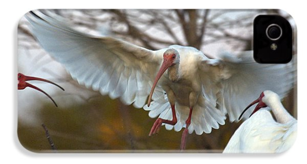 White Ibis IPhone 4s Case by Mark Newman