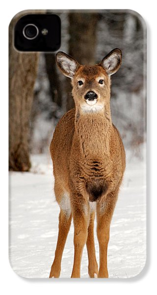 Whitetail In Snow IPhone 4s Case by Christina Rollo