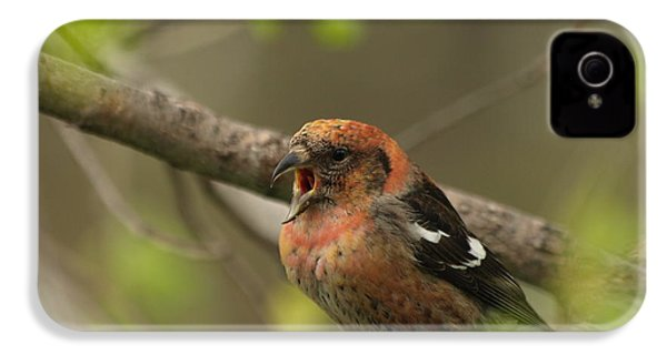 White-winged Crossbill IPhone 4s Case by James Peterson