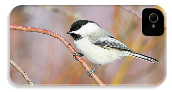Wyoming, Sublette County, Black-capped IPhone 4s Case by Elizabeth Boehm