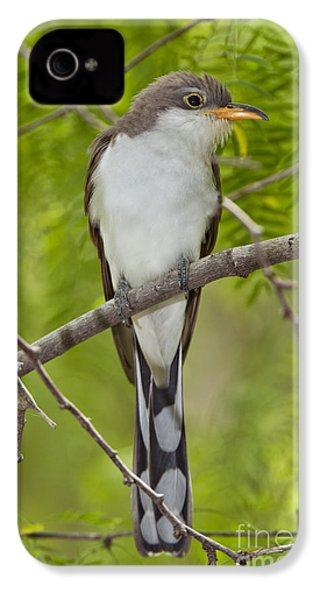 Yellow-billed Cuckoo IPhone 4s Case by Anthony Mercieca