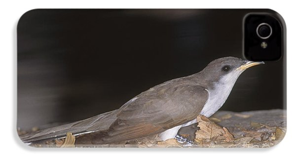 Yellow-billed Cuckoo IPhone 4s Case by Gregory G. Dimijian, M.D.