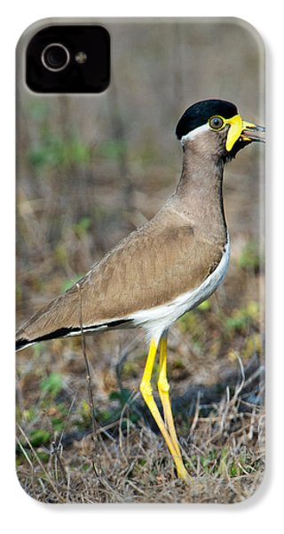 Yellow-wattled Lapwing Vanellus IPhone 4s Case by Panoramic Images