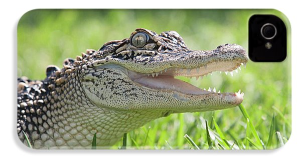 Young Alligator With Mouth Open IPhone 4s Case by Piperanne Worcester