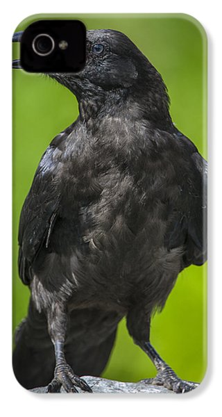 Young Raven IPhone 4s Case by Tim Grams
