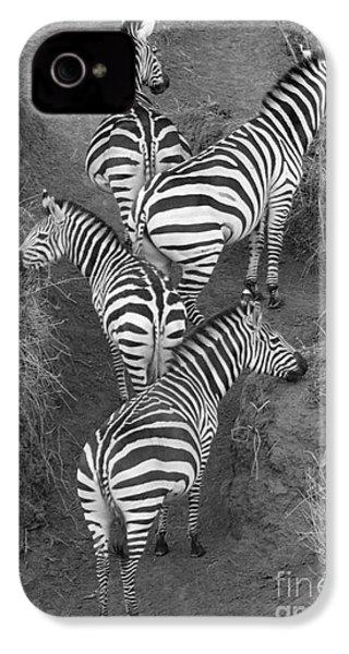 Zebra Design IPhone 4s Case by Carol Walker