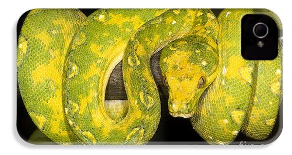 Green Tree Python IPhone 4s Case