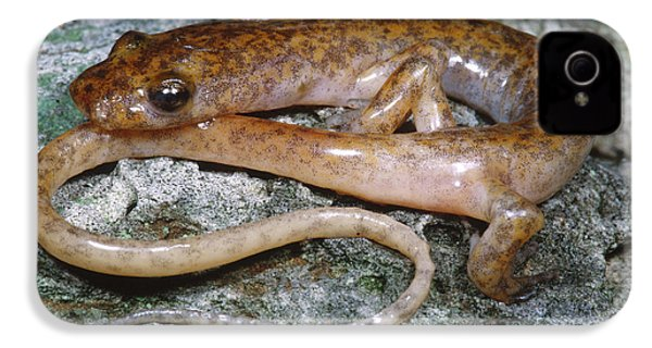 Cave Salamander IPhone 4s Case by Dante Fenolio