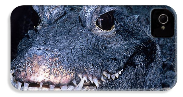 African Dwarf Crocodile IPhone 4s Case by Dante Fenolio