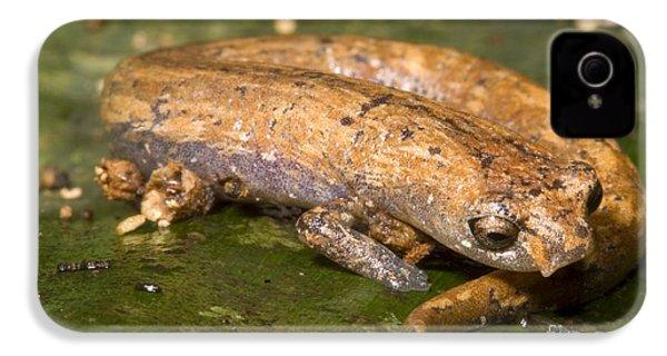 Bolitoglossine Salamander IPhone 4s Case by Dante Fenolio