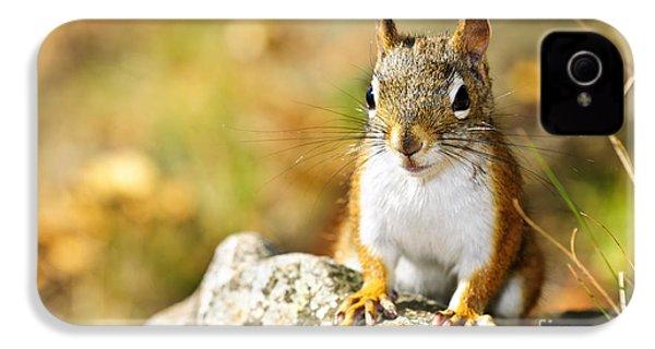 Cute Red Squirrel Closeup IPhone 4s Case
