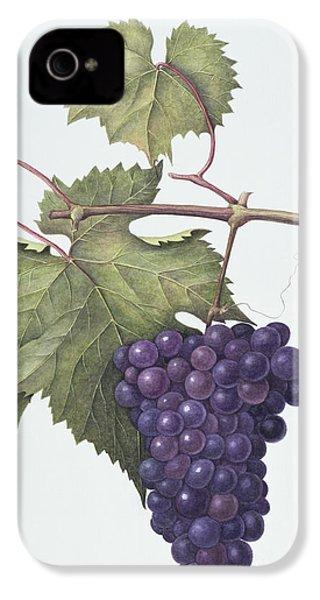 Grapes  IPhone 4s Case by Margaret Ann Eden