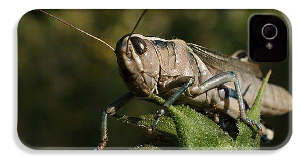 Grasshopper 2 IPhone 4s Case by Ernie Echols