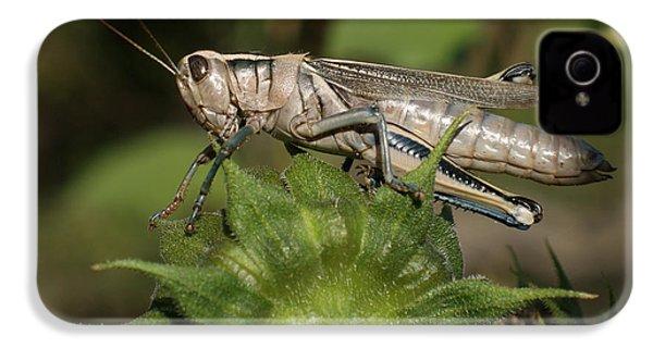 Grasshopper IPhone 4s Case by Ernie Echols