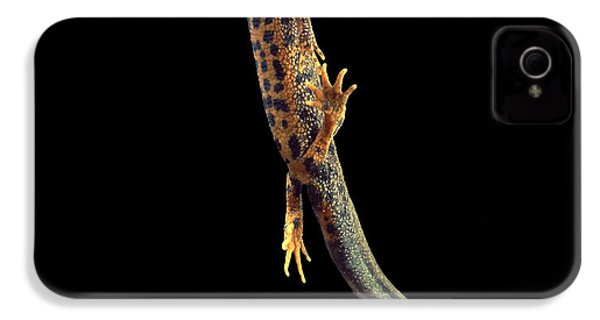 Great Crested Newt IPhone 4s Case by Andy Harmer