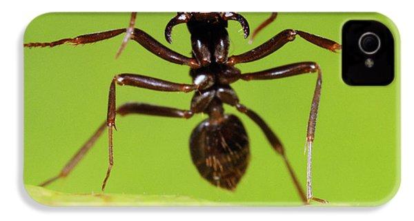 Japanese Slave-making Ant Polyergus IPhone 4s Case by Satoshi Kuribayashi