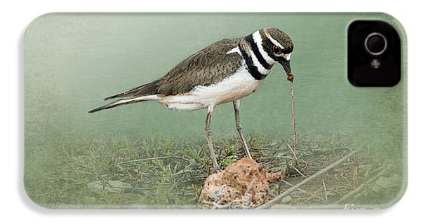 Killdeer And Worm IPhone 4s Case by Betty LaRue