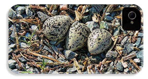 Killdeer Bird Eggs IPhone 4s Case