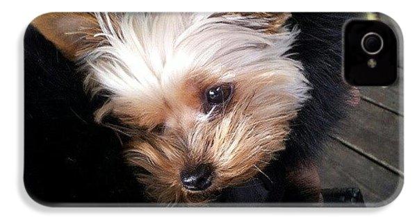 My #princess #dog #yorkie IPhone 4s Case