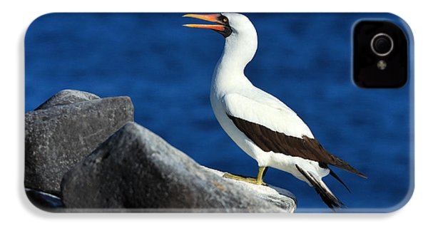 Nazca Booby IPhone 4s Case by Tony Beck