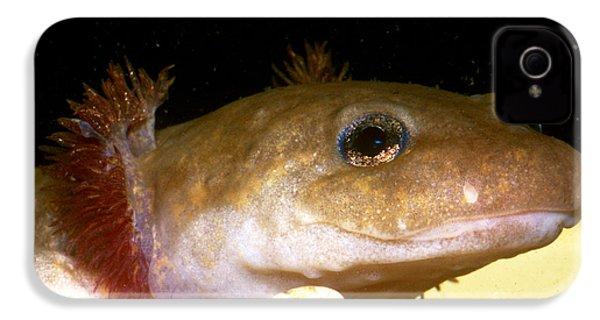 Pacific Giant Salamander Larva IPhone 4s Case by Dante Fenolio