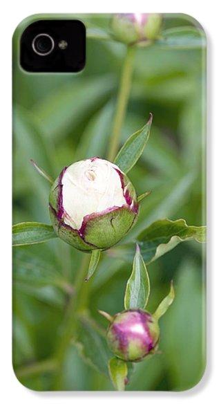 Paeonia Lactiflora 'shirley Temple' IPhone 4s Case by Jon Stokes
